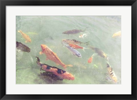 Framed Koi Reflections II Print