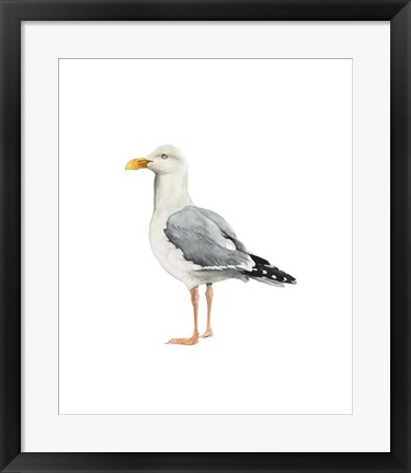 Framed Sea Bird II Print