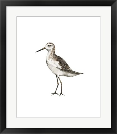 Framed Sea Bird VI Print