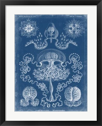 Framed Marine Blueprint IV Print