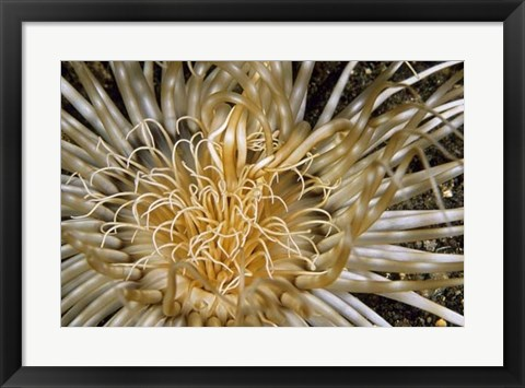 Framed Pure Dazzle - N. Sulawesi, Indonesia Print