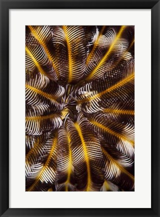 Framed Feather Treasure - N. Sulawesi, Indonesia Print