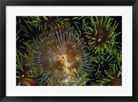 Framed Enchanting - Indonesia Print