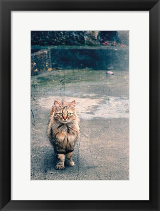 Framed Eyes of the Sicilian Cat Italy Print