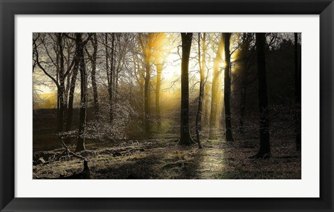 Framed Autumn Lights Print