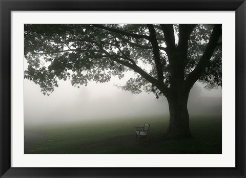 Framed Misty Bench Print