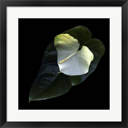 Framed Anthurium 1 Print