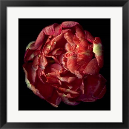 Framed Double Red Tulip Print