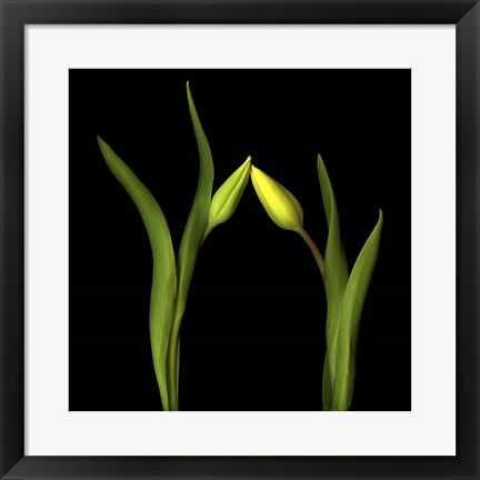 Framed On Point - Tulips Print