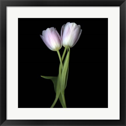 Framed Pale Pink Tulips Print