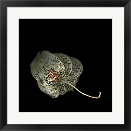Framed Physalis Print