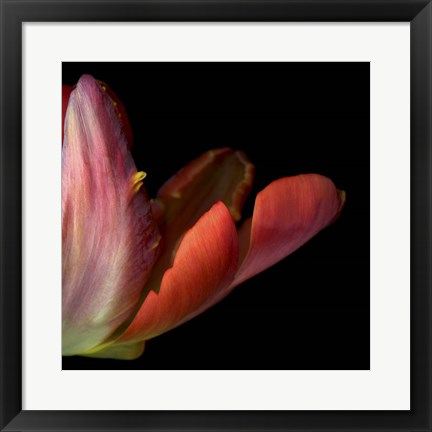 Framed Red Tulip Abstract Print