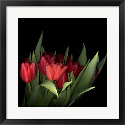 Framed Red Tulips 5 Print