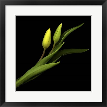 Framed Sway With Me - Tulips Print