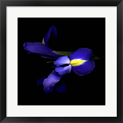 Framed Sensuality Of The Blue Iris Print