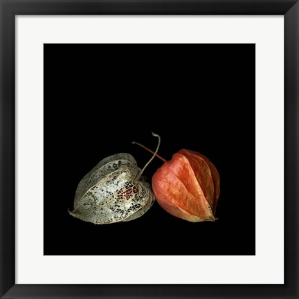 Framed To Be And Not To Be - Physalis Print