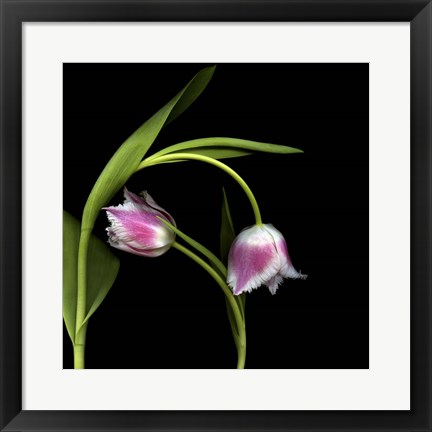 Framed To Love And Protect - Tulips Print