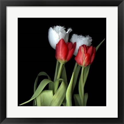 Framed Tulips From Amsterdam Print