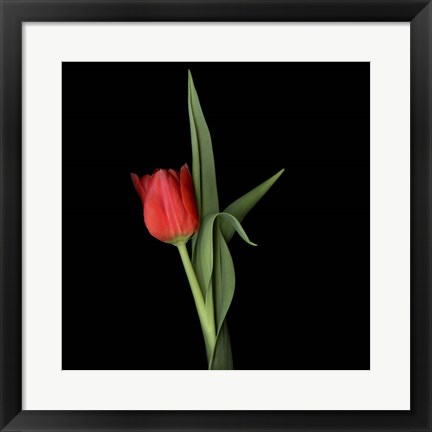 Framed Valentine Where Are You - Red Tulip Print