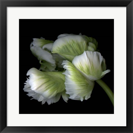 Framed White And Green Parrot Tulip Print
