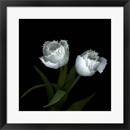 Framed Wo Frayed Egos - Tulips Print