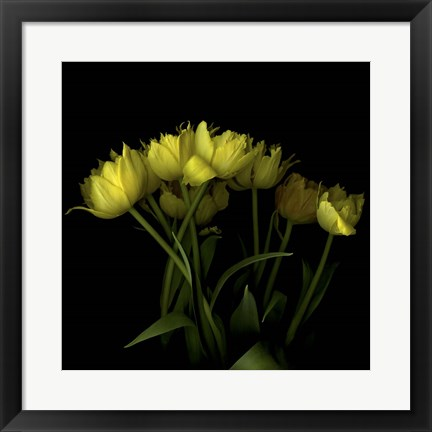 Framed Yellow Tulips 1 Print