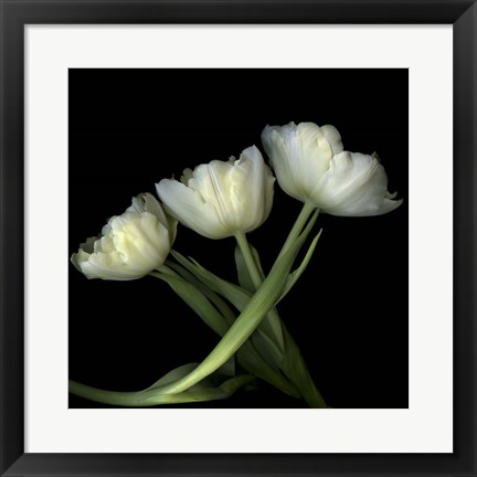 Framed Yellow White Tulips 2 Print