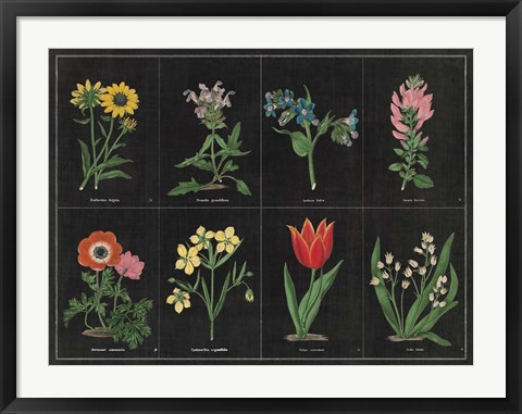 Framed Botanical on Black Chart I Print