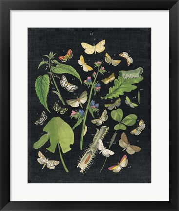 Framed Butterfly Bouquet on Black III Print