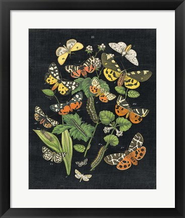 Framed Butterfly Bouquet on Black IV Print