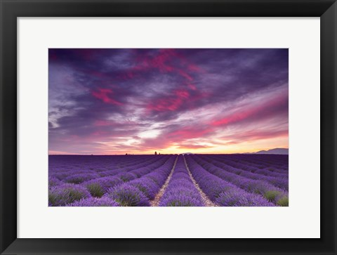 Framed Pink and Purple Print