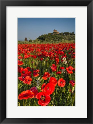 Framed Poppies at Palazzo Massaini Print