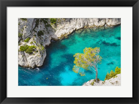 Framed Tree on Turquoise Waters Print