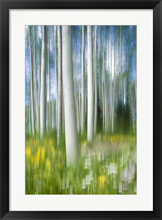 Framed Aspen Impression Print