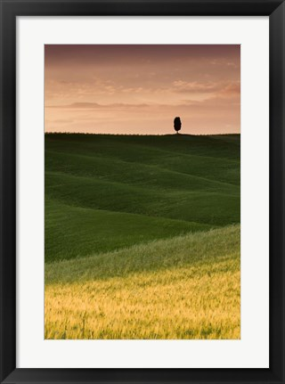 Framed Lone Cypress - Vertical Print