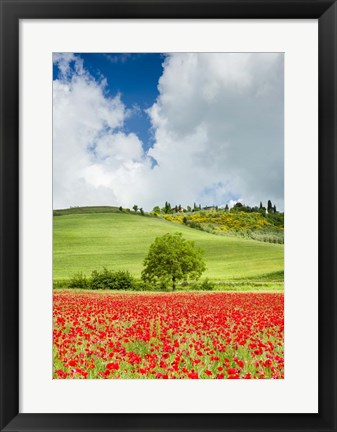 Framed Tuscan Poppies - Vertical Print