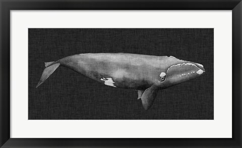 Framed Inverted Whale II Print