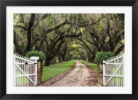 Framed Plantation Road Print