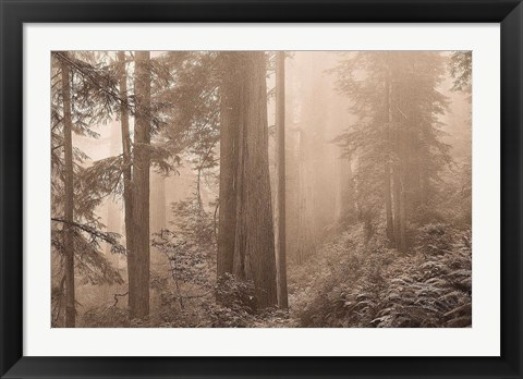 Framed Enchanted Forest II Print