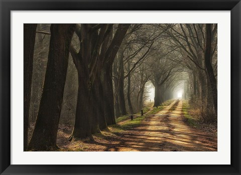 Framed Paths Print