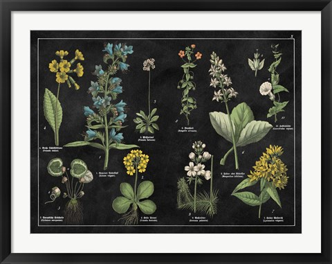Framed Botanical Floral Chart I Black and White Print