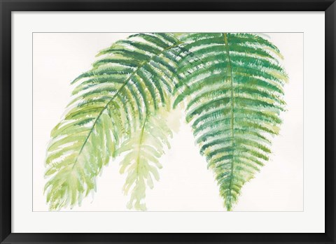 Framed Ferns III Square Print