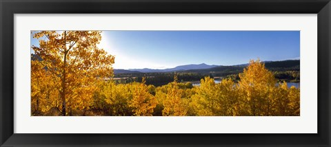 Framed Trees at Oxbow Bend, Grand Teton National Park, Wyoming Print