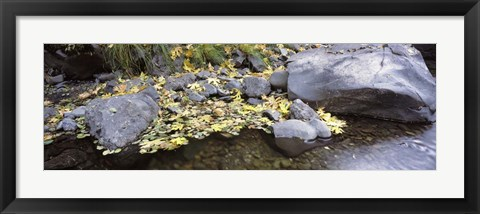 Framed Pilot Creek , Humboldt County, California Print