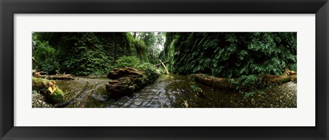 Framed Fern Canyon, Redwood National Park Print