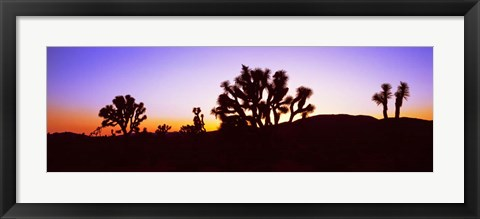 Framed Joshua Tree National Park, California Print
