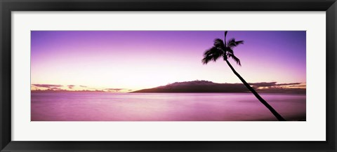 Framed Palm Tree on Purple, Maui, Hawaii Print