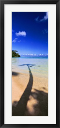 Framed Palm Tree Shadow, Tahiti, French Polynesia Print