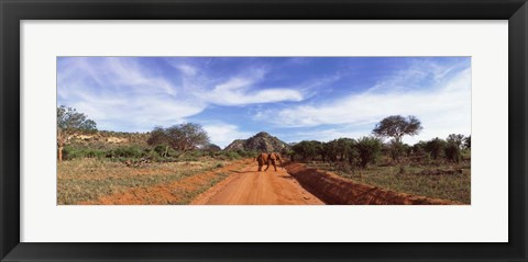 Framed Elephant in Tsavo East National Park, Kenya Print