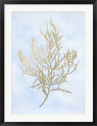 Framed Gold Foil Algae III on Blue - Metallic Foil Print